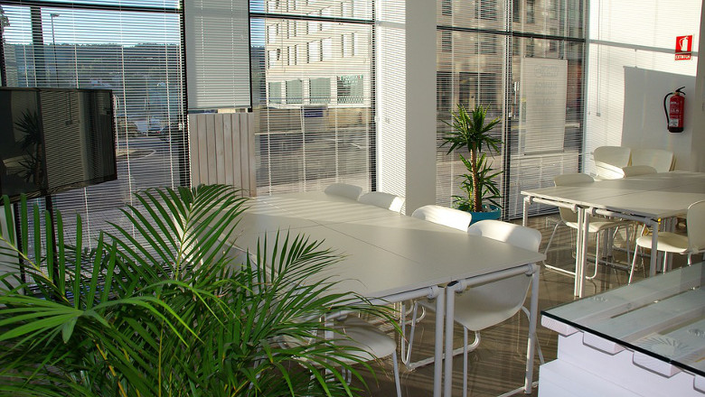 salle-de-reunion-plantes