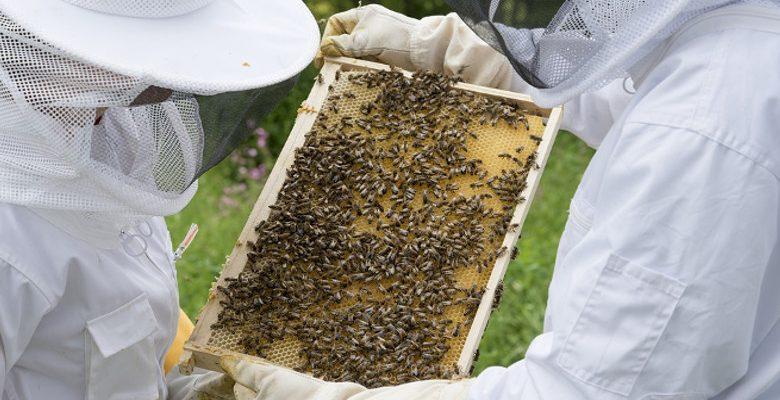 L'apiculture urbaine, un projet pour renforcer la cohésion des équipes